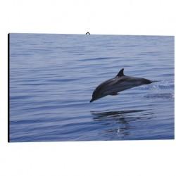 Quadro Delfino Art. 09 cm 35x50 Arredo Trasporto Gratis intelaiato pronto da appendere Stampa su tela Canvas